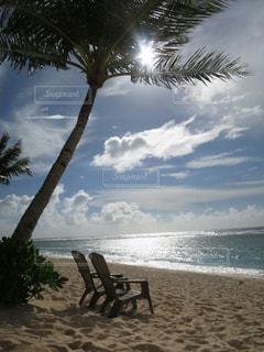 ヤシの木のあるビーチの写真・画像素材[3206311]