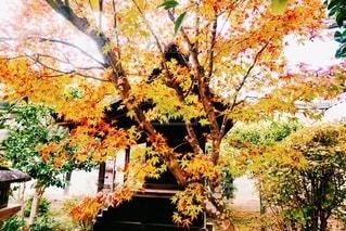 京都の紅葉の写真・画像素材[3382257]