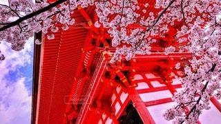 春の写真・画像素材[3207505]