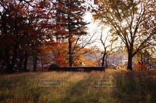 畑の大きな木の写真・画像素材[3208790]