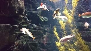 水の中の魚のグループの写真・画像素材[3211546]