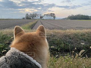冬の田園の夕暮れと愛犬の写真・画像素材[3888904]