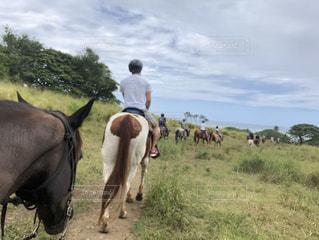 ハワイで乗馬の写真・画像素材[3210640]
