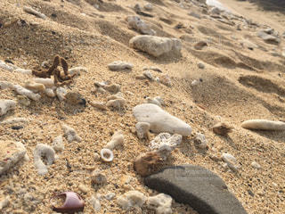 海の写真・画像素材[131161]