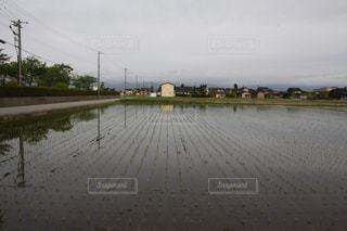 水田の風景の写真・画像素材[3217513]