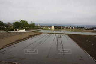 水田の風景の写真・画像素材[3217514]