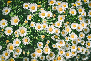 Flowerの写真・画像素材[3211820]