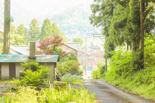 村に降りる道の写真・画像素材[3279613]