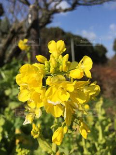 花の写真・画像素材[318437]