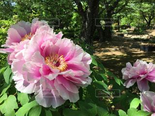 花の写真・画像素材[538079]