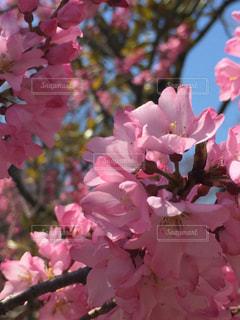 花の写真・画像素材[538102]