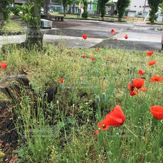 草の中に座っている赤い消火栓の写真・画像素材[1159112]