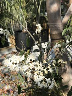 木の花の花瓶の写真・画像素材[1159150]