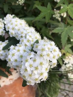 近くの花のアップの写真・画像素材[1159153]