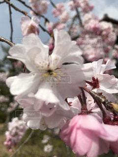 近くの花のアップの写真・画像素材[1159185]