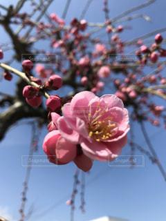 近くの花のアップの写真・画像素材[1159260]