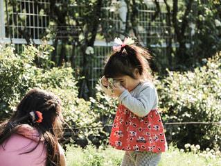 花輪を顔に当てる幼女の写真・画像素材[3217851]