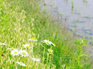 花畑のクローズアップの写真・画像素材[3221278]