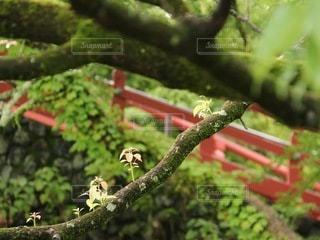 木々の中の赤い橋の写真・画像素材[3538168]