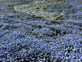 花の写真・画像素材[130270]