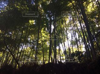 京都の写真・画像素材[267521]