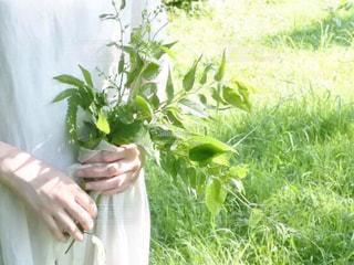 新緑の季節にの写真・画像素材[3303142]