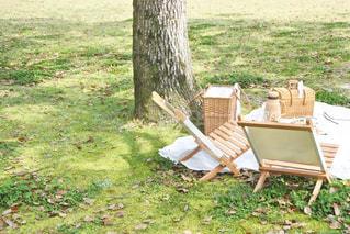 芝生でピクニックの写真・画像素材[3303169]