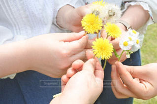 花を持つ手の写真・画像素材[3303173]