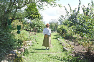 秘密の花園の写真・画像素材[3303312]