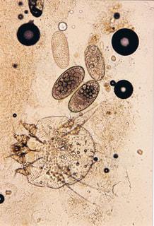 自然の写真・画像素材[135830]