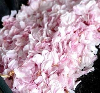 花のクローズアップの写真・画像素材[3116460]