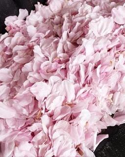 花のクローズアップの写真・画像素材[3116447]
