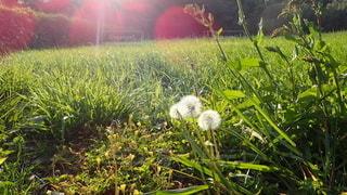 緑豊かな畑のクローズアップの写真・画像素材[3116484]