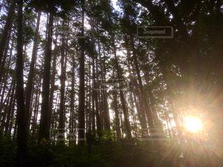 森に光をの写真・画像素材[3233729]