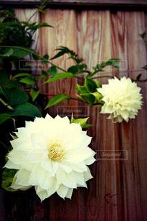 花の写真・画像素材[142039]
