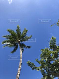木の隣にあるヤシの木の群の写真・画像素材[3225854]