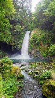 神聖なる森の滝の写真・画像素材[3249240]
