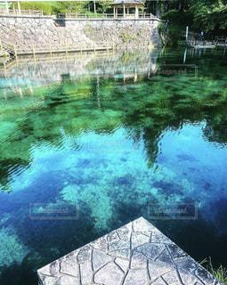 池のクローズアップの写真・画像素材[3227908]