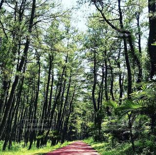 森の風景写真の写真・画像素材[4231550]