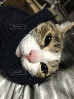 猫のクローズアップの写真・画像素材[3226216]