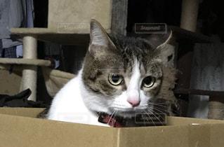箱の中に座っている猫の写真・画像素材[3226156]