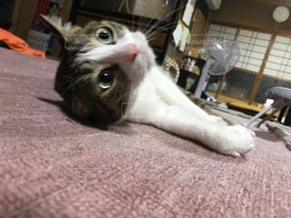 床に横たわる猫の写真・画像素材[3226223]
