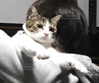 抱っこされた猫の写真・画像素材[3226180]
