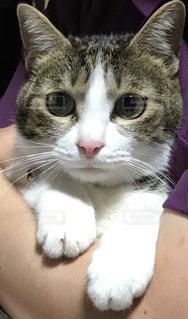 猫の写真・画像素材[3226198]