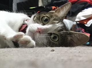 ベッドに横たわる猫の写真・画像素材[3226209]