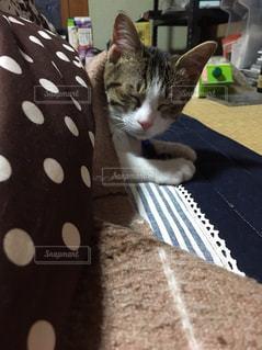 テコタツで眠る猫の写真・画像素材[3226213]