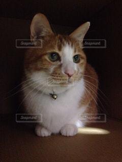 見つめる猫の写真・画像素材[3226294]