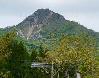 背景に山のある木の写真・画像素材[3226806]