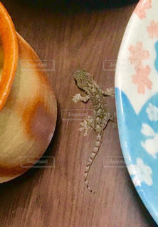 木製のテーブルの上のヤモリの写真・画像素材[3231403]