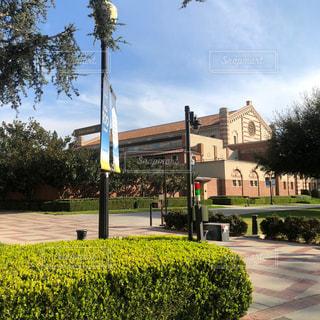 カリフォルニア大学ロサンゼルス校の写真・画像素材[3228356]
